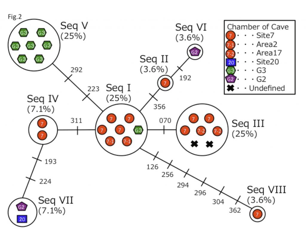 verteba-cave-mtDNA