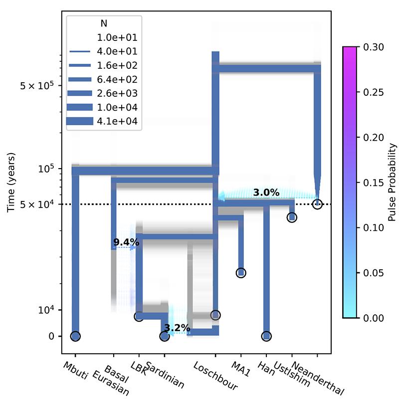 inferred-model-bootstrap-basal-eurasian