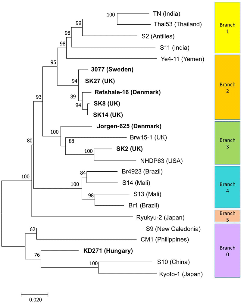 leprosy-phylogenetic-tree