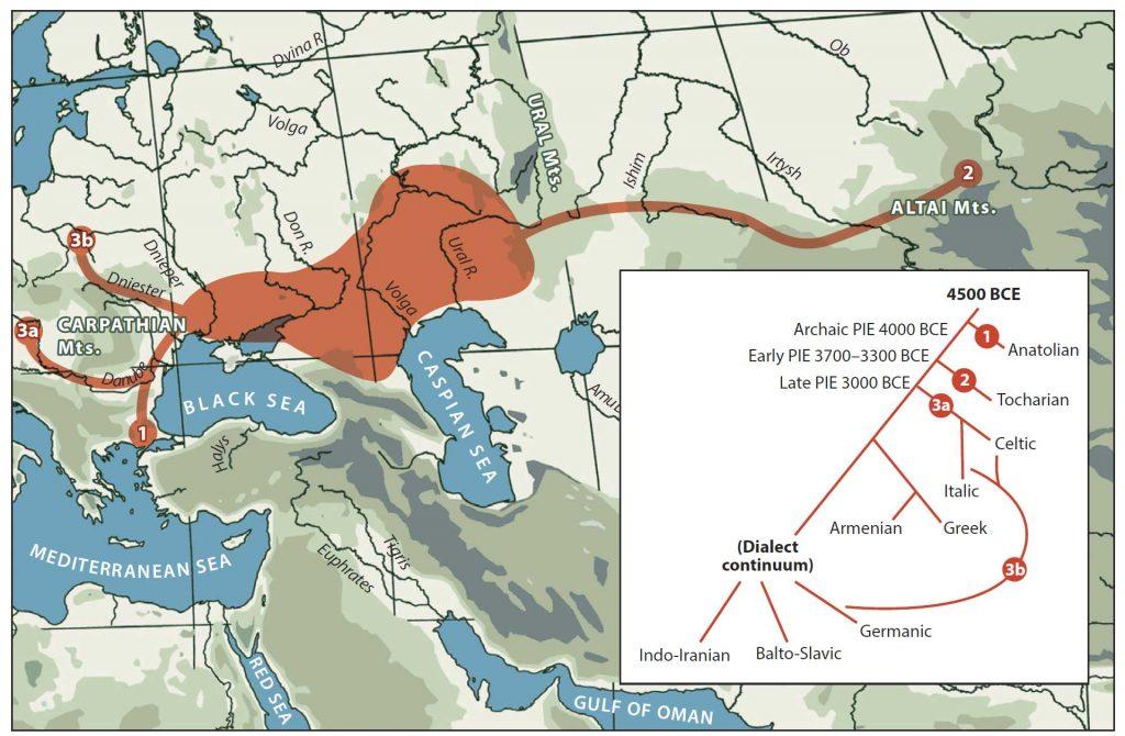 anthony-ringe-migration-model