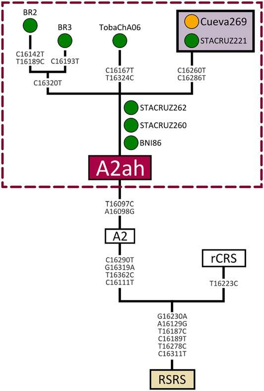 phylogeny-a2ah-mtdna