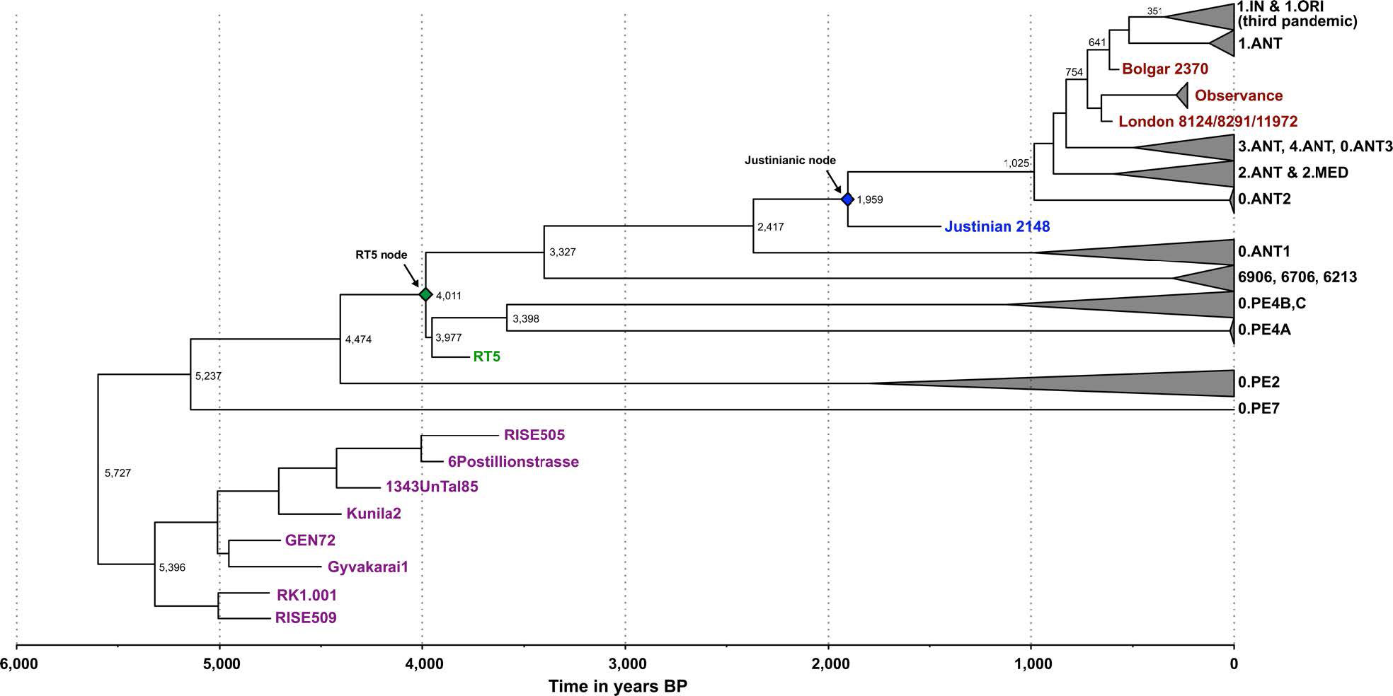 treeannotator_Oldest bubonic plague genome decoded in Srubna ca. 3800 YBP – Indo-European.eu
