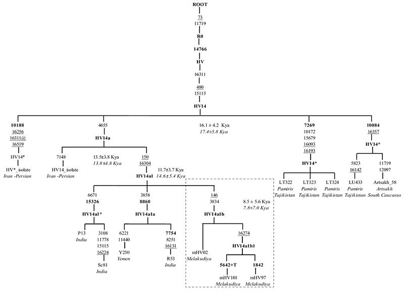 hv14-mtdna-haplogroup