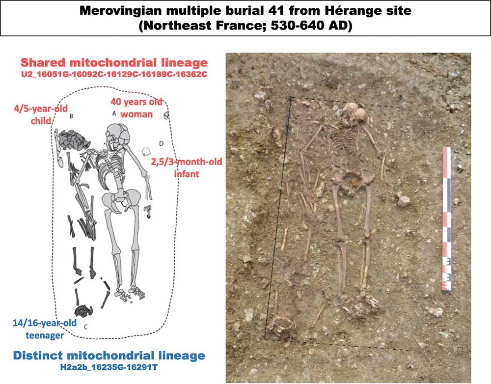 mitogenomes-merovingian