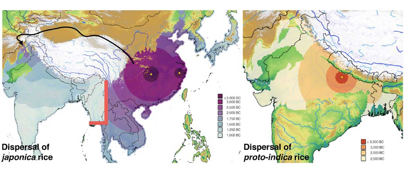 Modelling of prehistoric dispersal of rice varieties in India point to a north-western origin