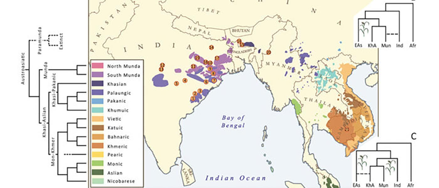 Munda admixture happened probably during the ANI-ASI mixture