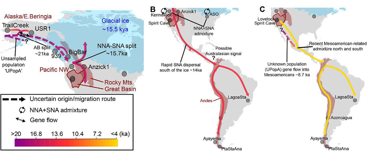 Deep population history of North, Central and South America