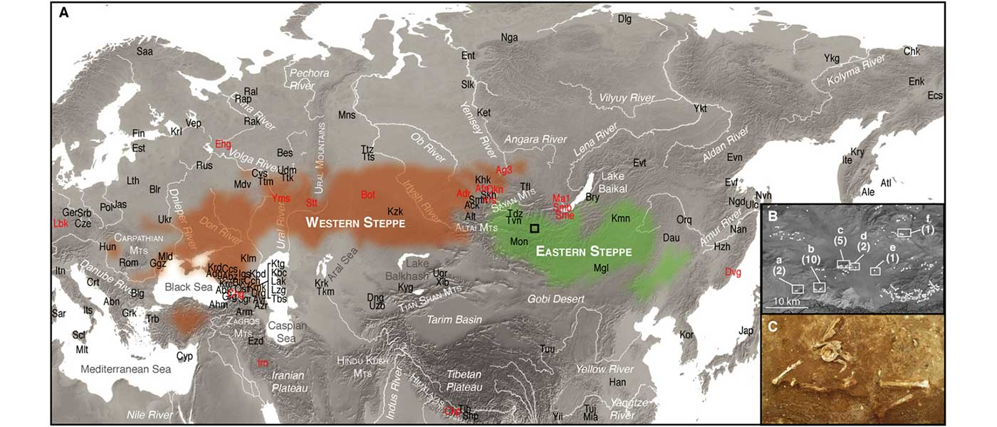 Minimal gene flow from western pastoralists in the Bronze Age eastern steppes