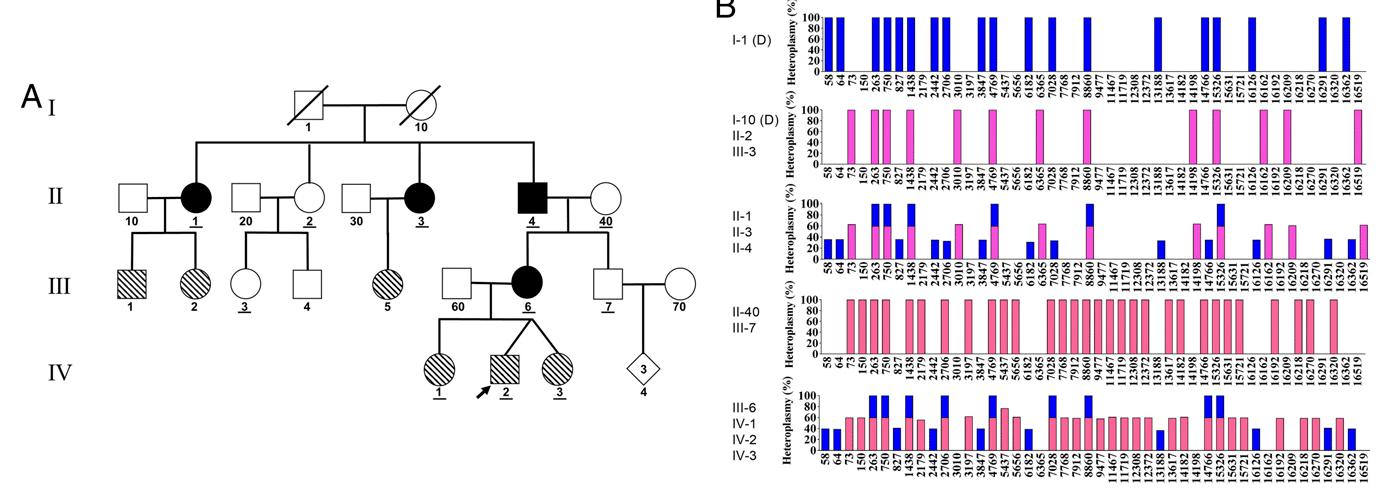 Biparental inheritance of mitochondrial DNA in humans
