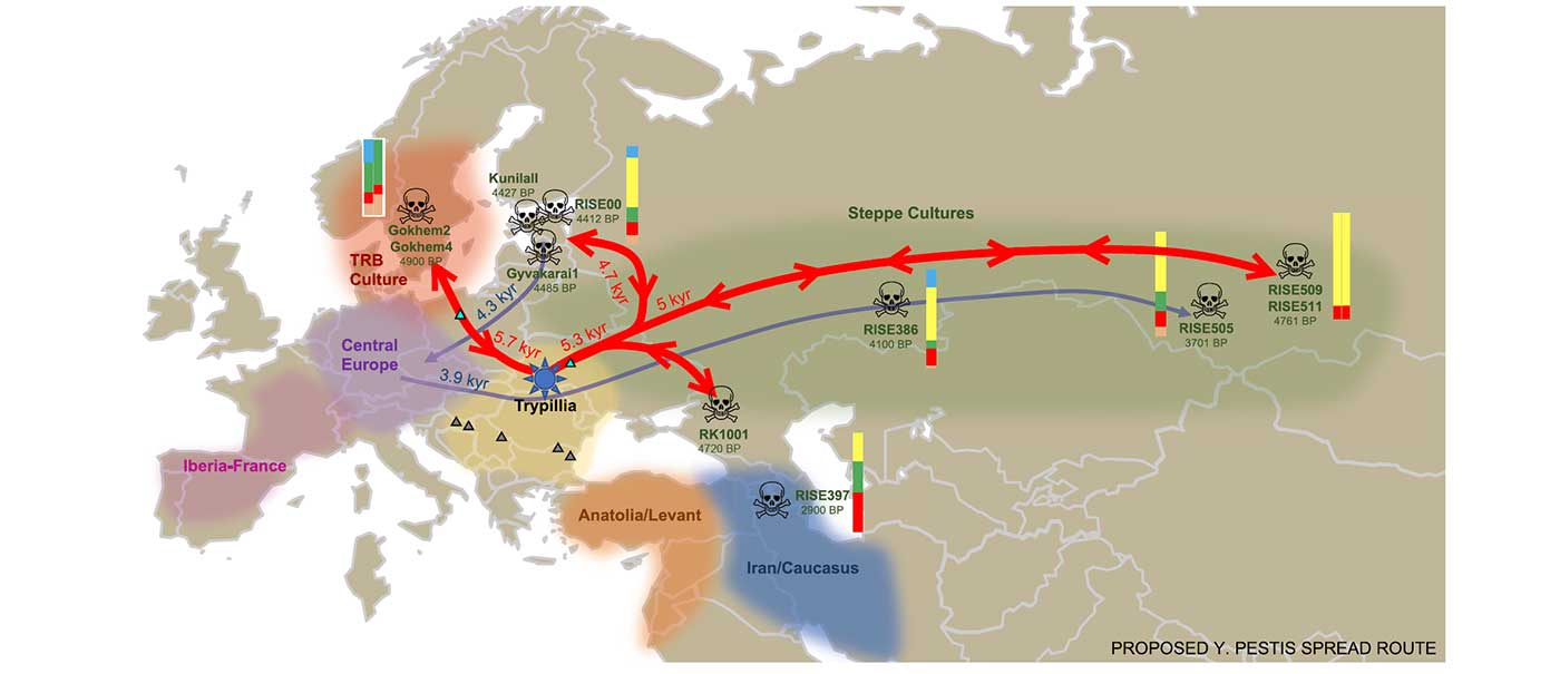 Spread of Y. pestis, earlier than previously thought, may have caused Neolithic decline