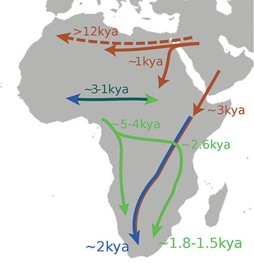 african-popularion-movements