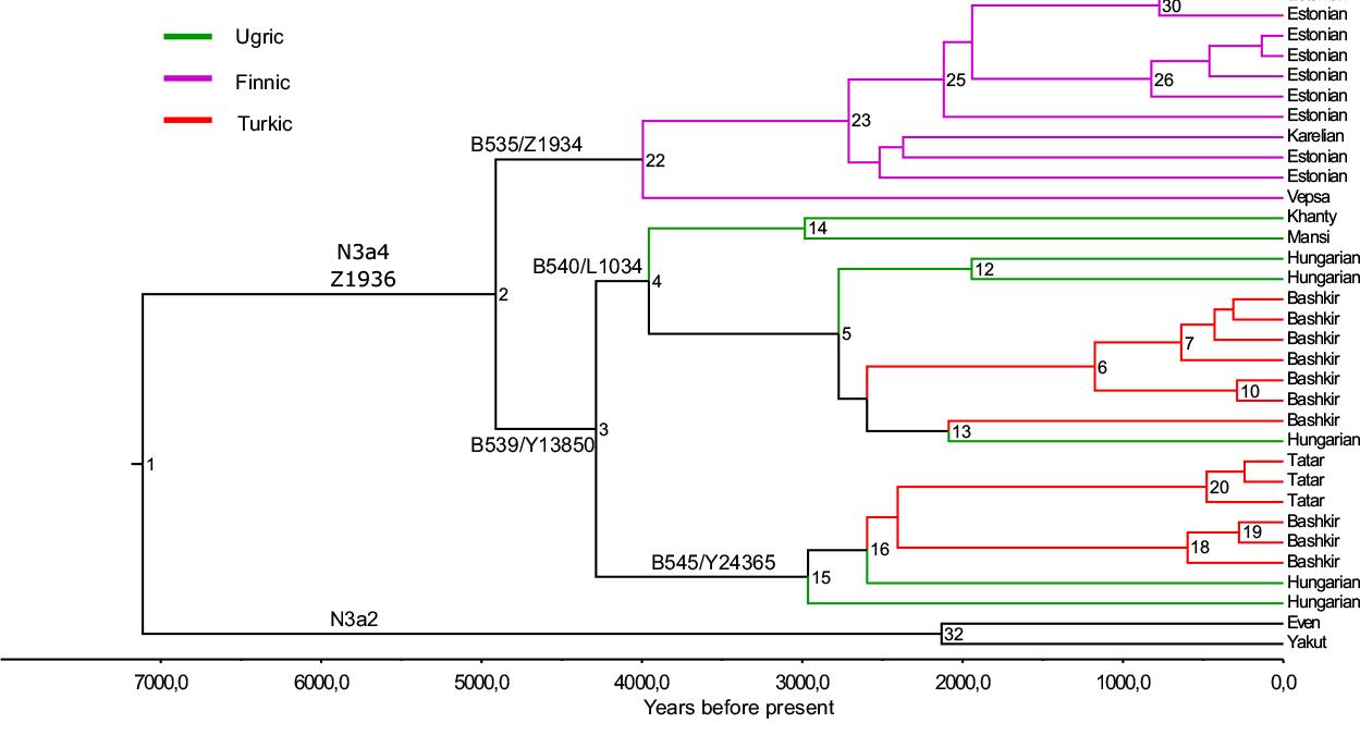 altaic-uralic-n1c-haplogroup