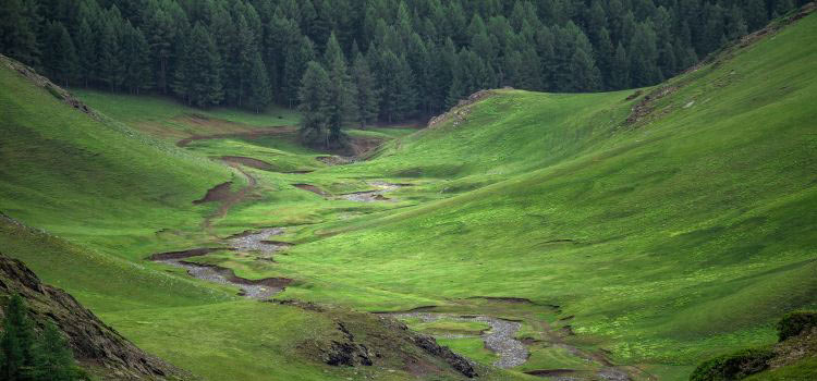 balikun-grassland