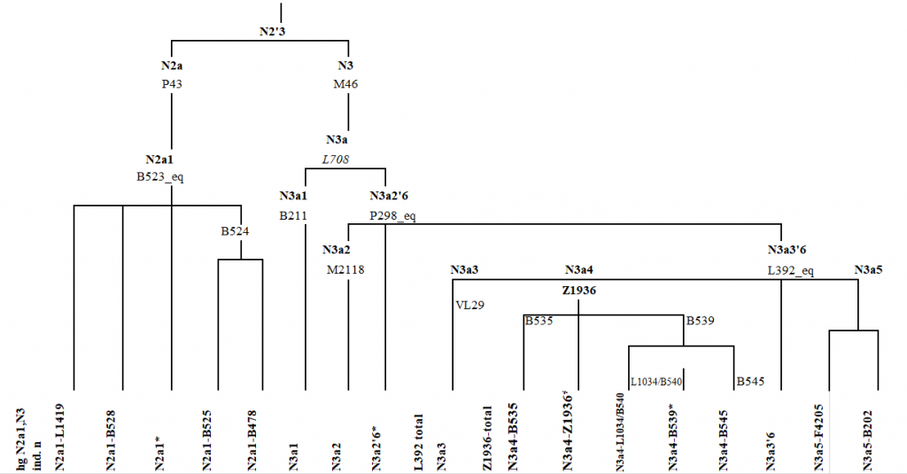 haplogroup-n1a-scheme