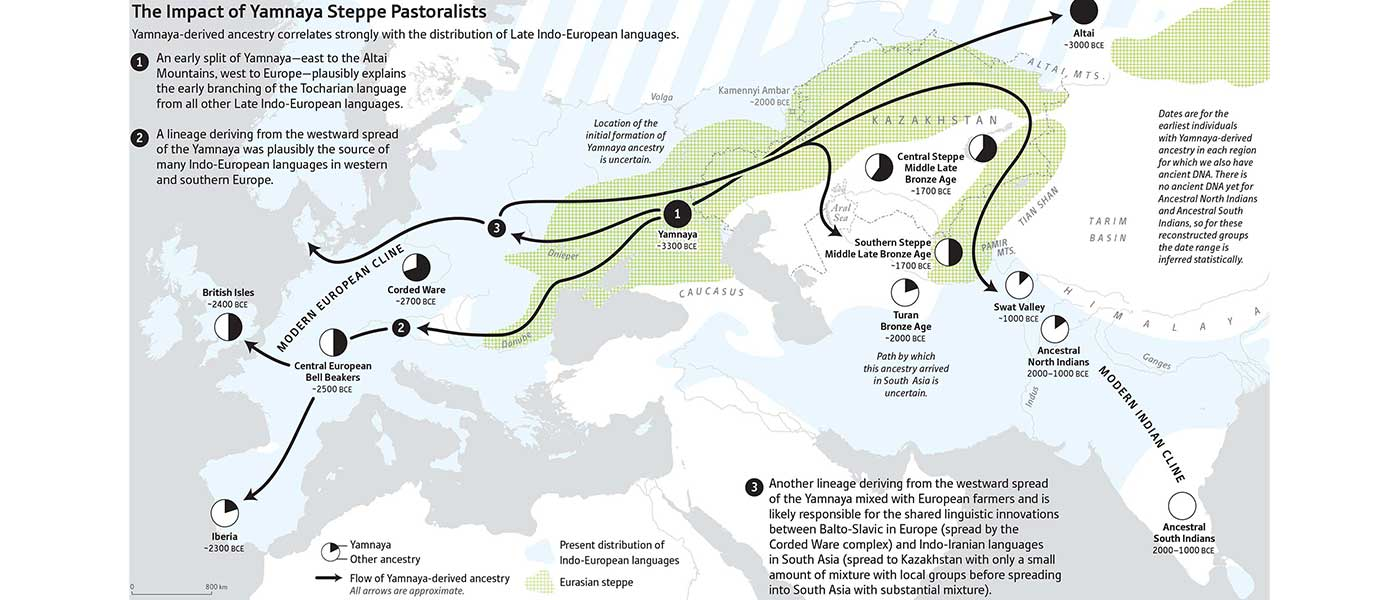 Yamnaya replaced Europeans, but admixed heavily as they spread to Asia