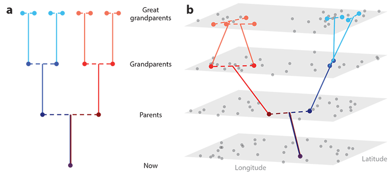 spatial-pedigree-geographic-admixture
