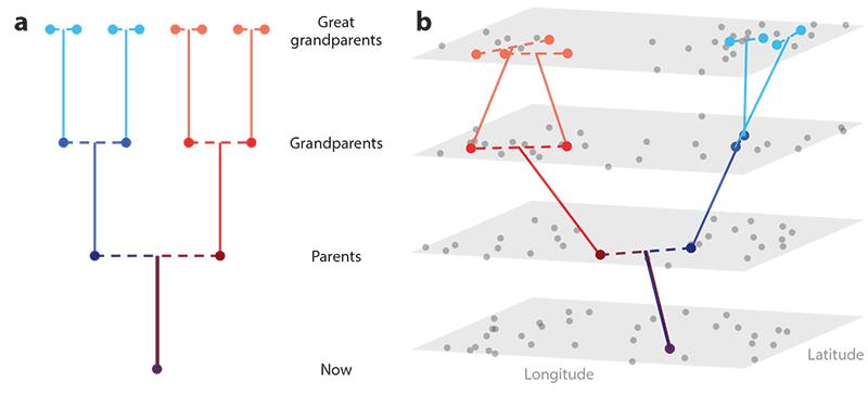 spatial-pedigree-geographic-admixture