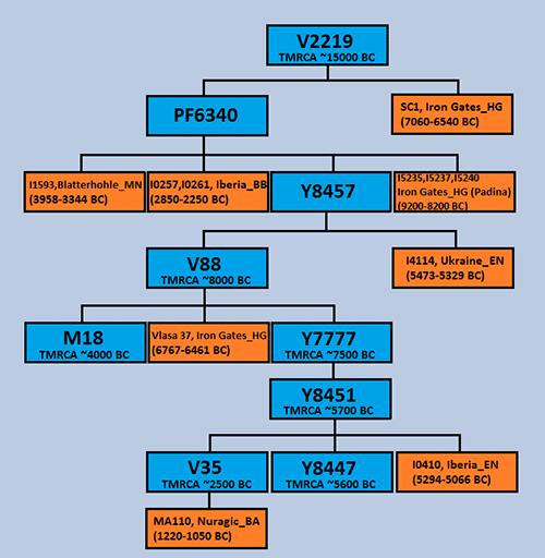 pribislav-r1b-v2219-haplotree