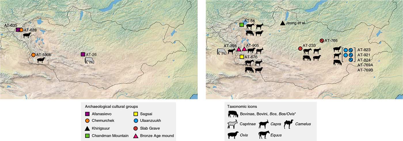 afanasievo-chemurchek-pastoralism