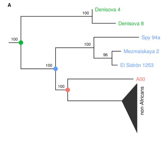 Neandertal-Denisovan Y-DNA