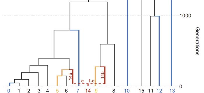 qpadm-population-simulation