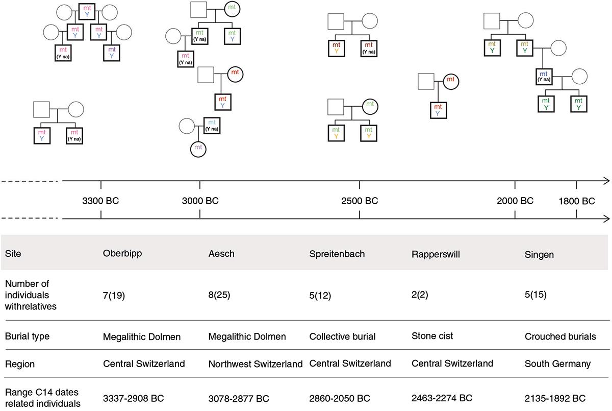switzerland-neolithic-kinship-family-tree