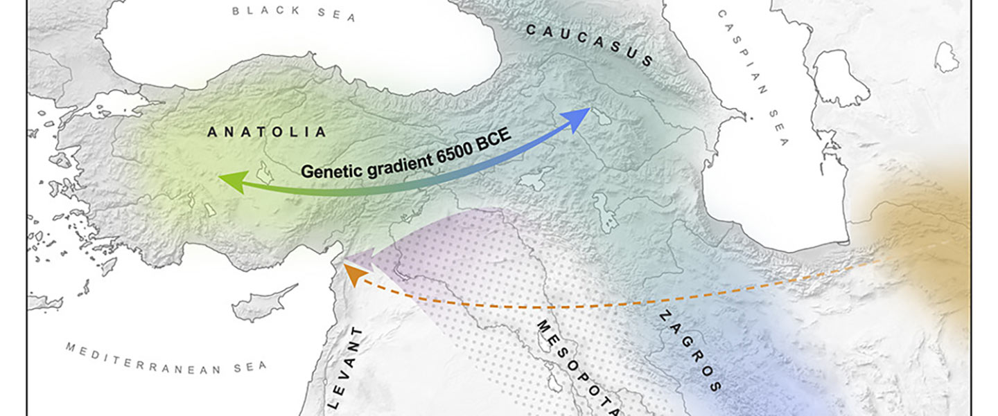 Demographically complex Near East hints at Anatolian and Indo-Aryan arrival