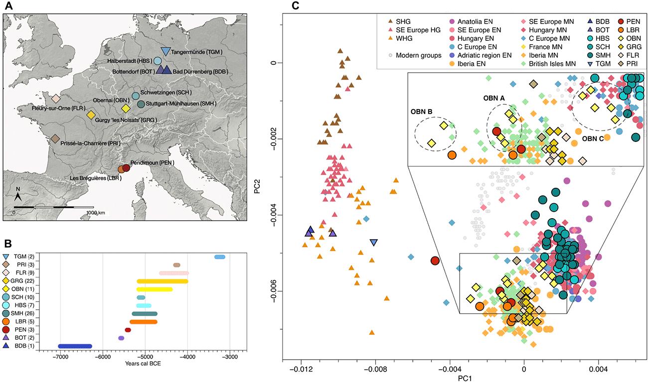 pca-neolithic-whg-eef-ancestry
