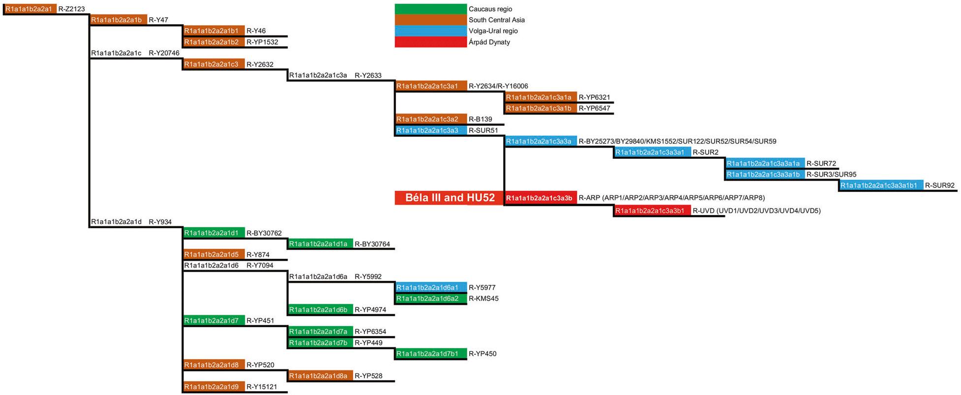 bela-arpad-dynasty-hu52-r1a-z2123-haplogroup