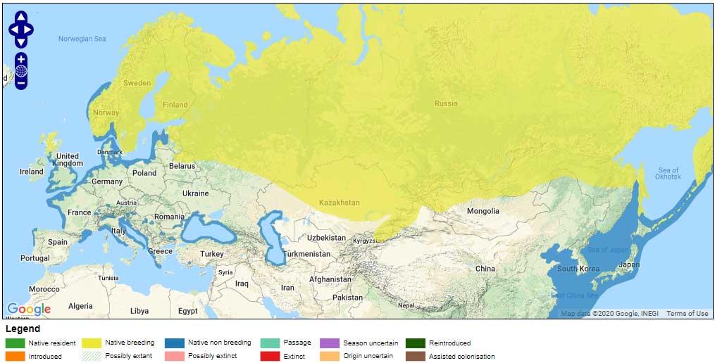 arctic-loon-range