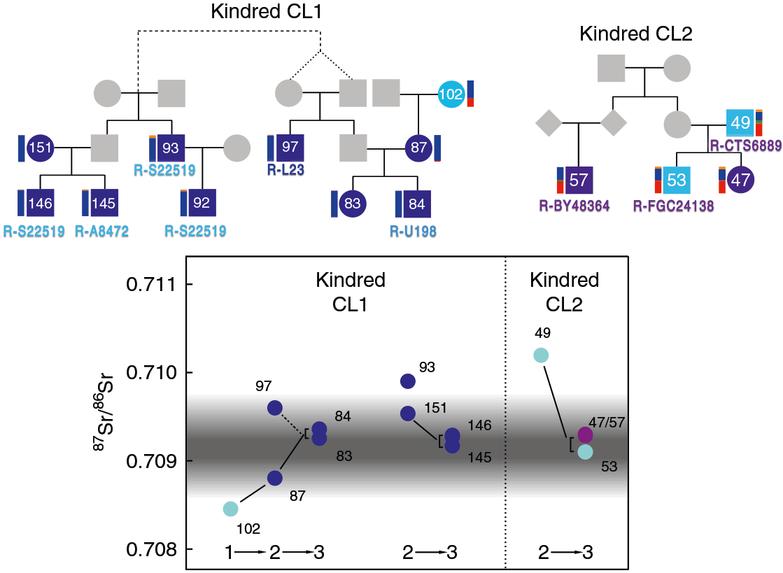 collegno-family-tree-isotopic
