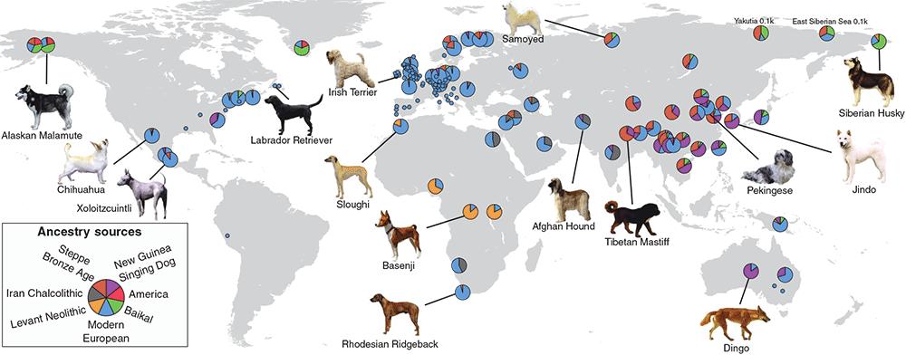modern-dog-ancestry