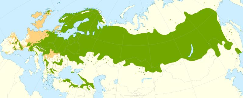 pinus-sylvestris-range