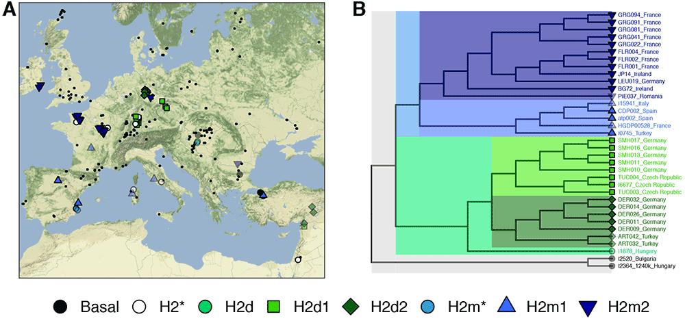h2-phylogeny