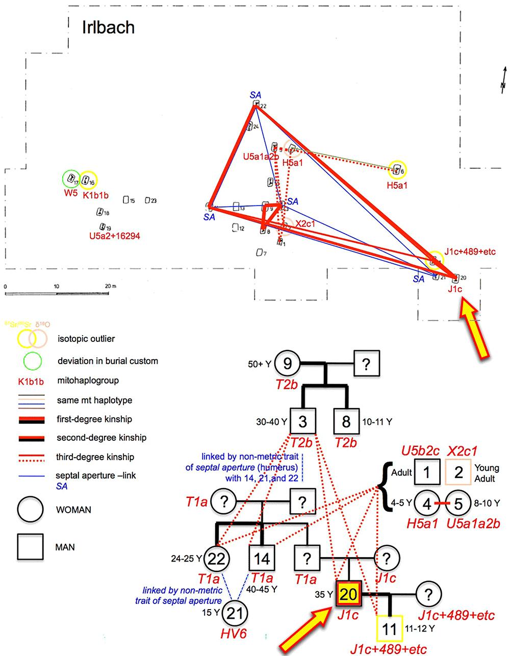 irlbach-cemetery-mtdna