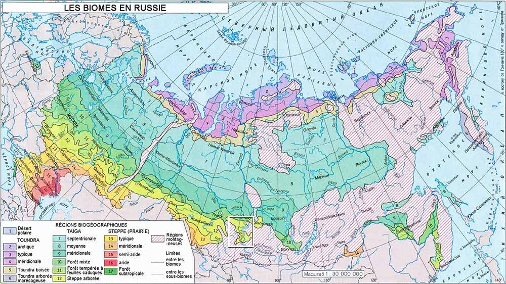 biomes-vegetation-russia-small