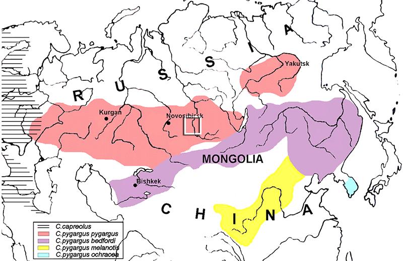 siberian-roe-deer-distribution