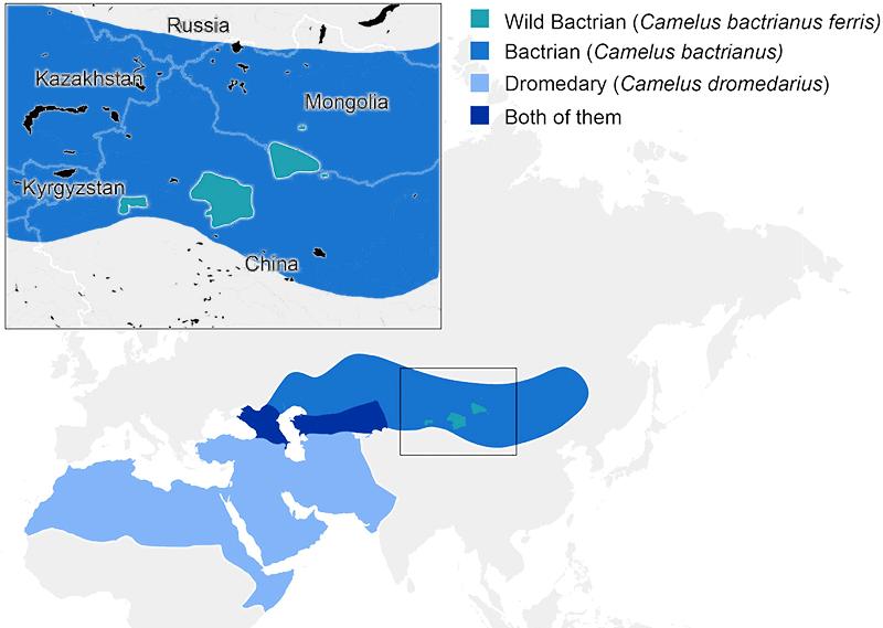 camel-distribution-map