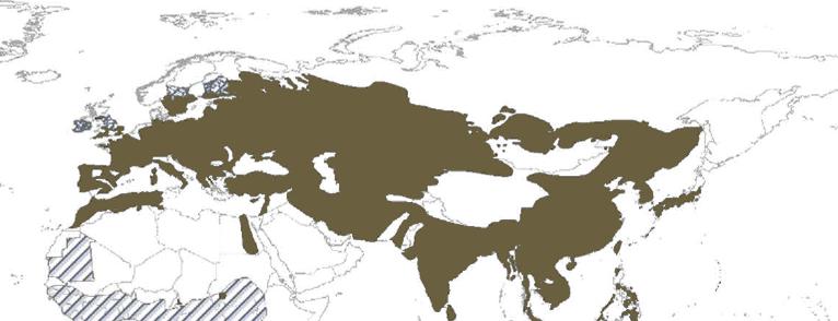 wild-pig-distribution-map